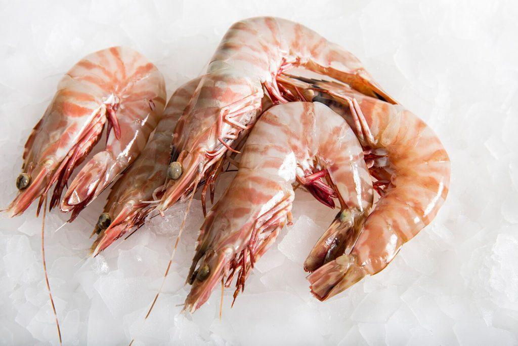 میگو ببری یکی از برترین انواع میگوی خوراکی که بیشتر در آب های بوشهر در خلیج فارس یافت می شود