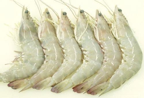 میگو سفید ( Jinga shrimp )